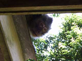 Monkey Behind Us On The House